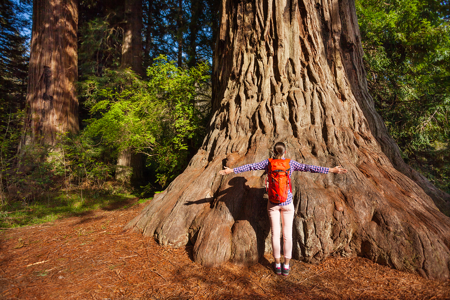 woman standing in front of a huge tree shows the concept of pulling up strength by using a technique called grounding